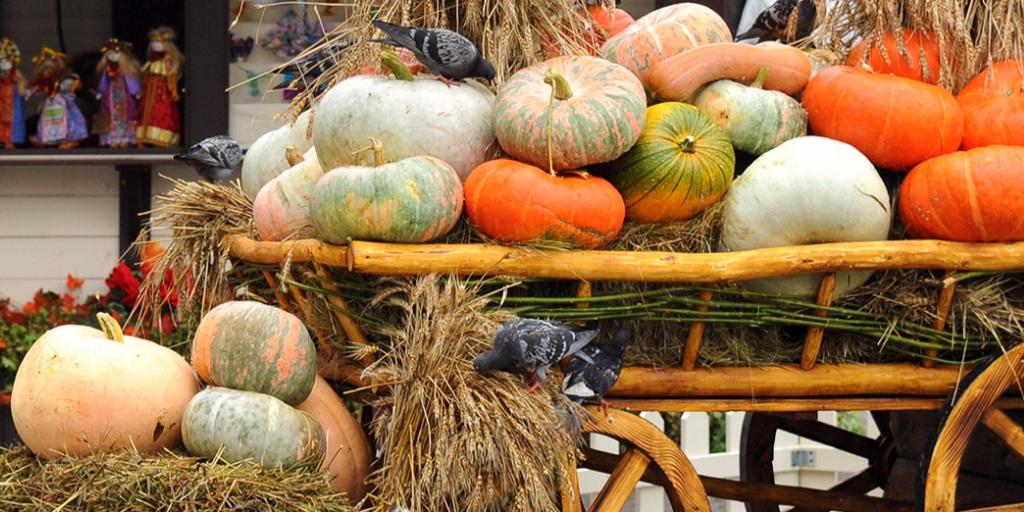Фестиваль Золотой Осени в Адыгее 2019