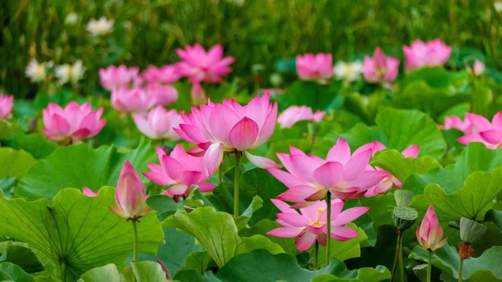 В краю цветущего лотоса и жемчужины буддизма (3 дня/2 ночи)