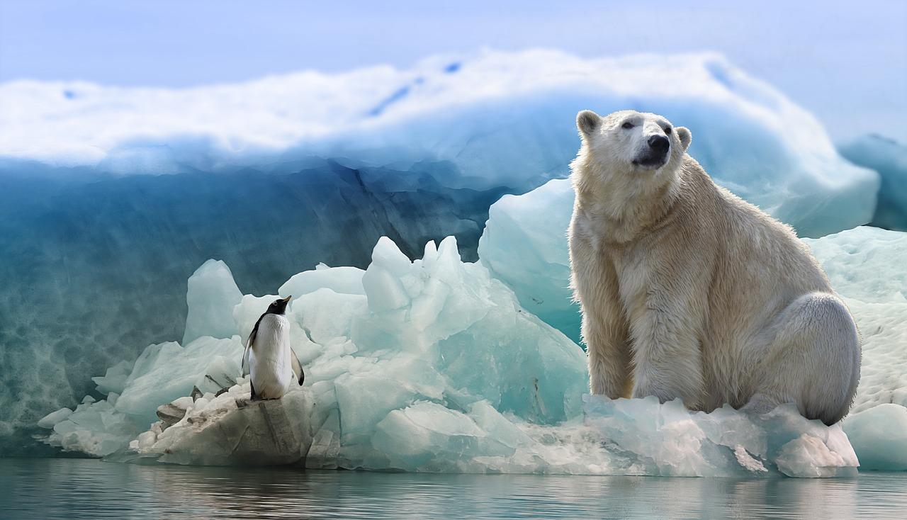 Лёд и Пламя - Круиз в Антарктиду