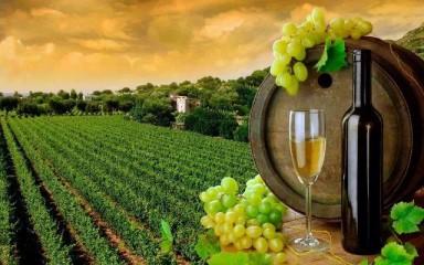 Вино, Шампанское… и Казаки